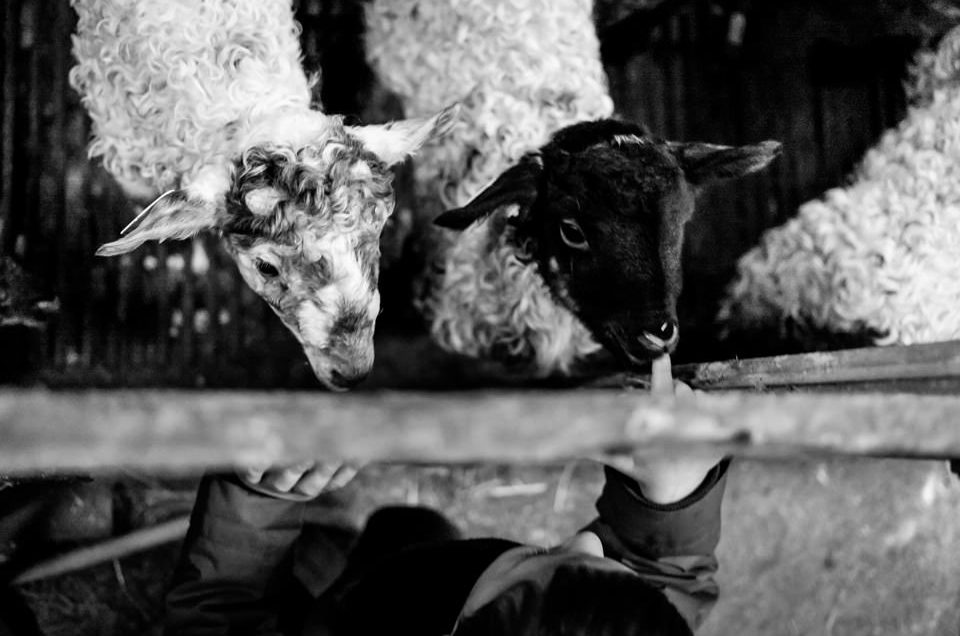 FOTOGRAFÍA INFANTIL EN MIRANDAOLA